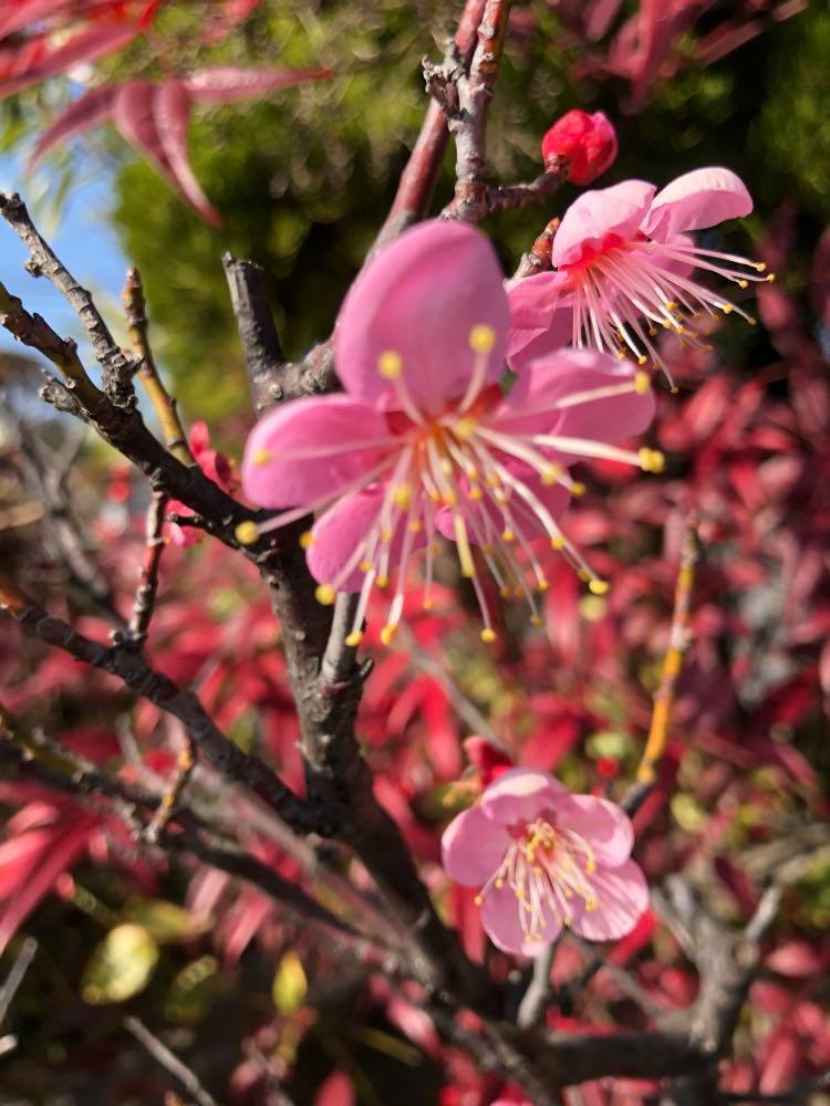桜 5.jpg