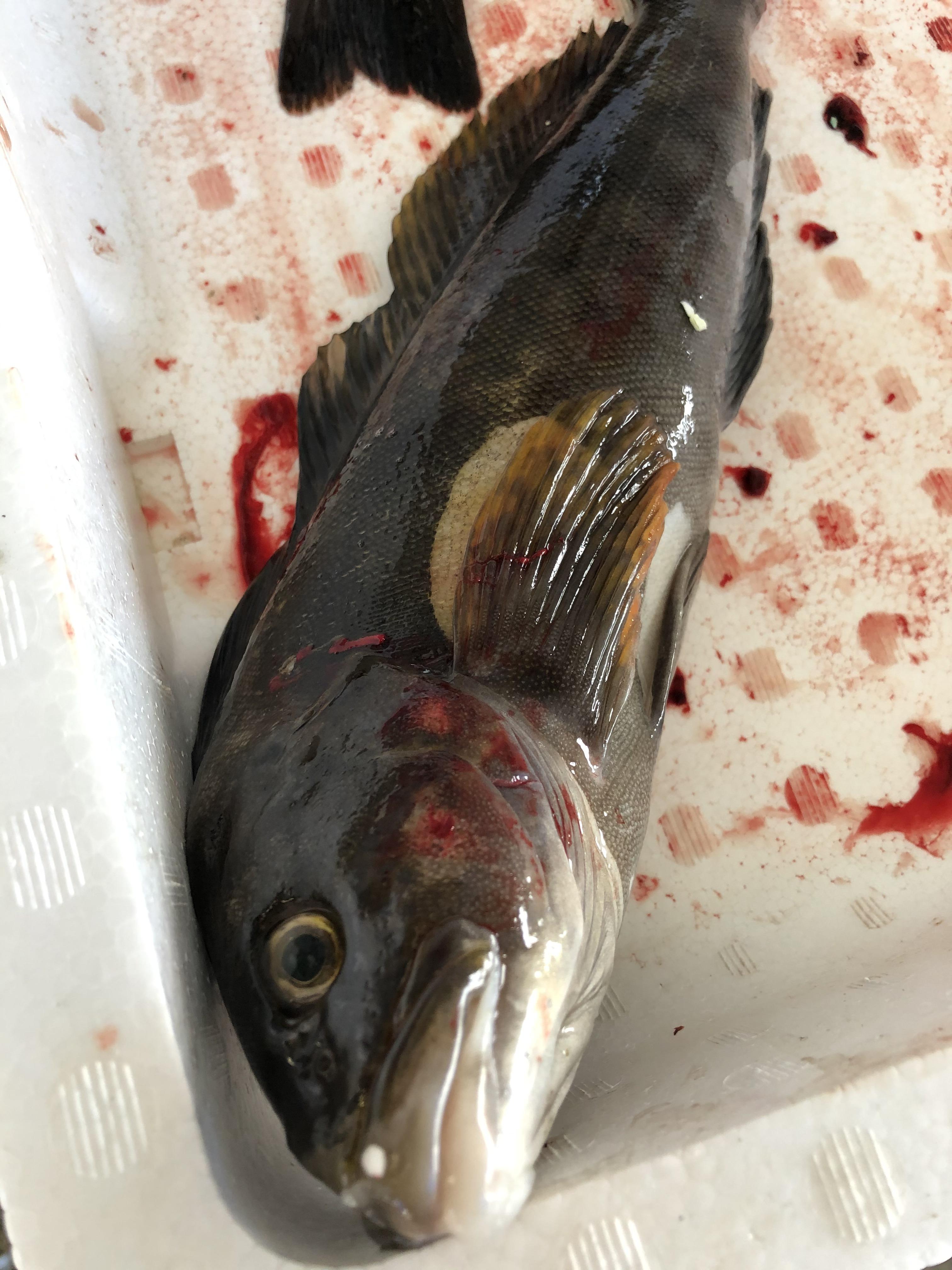 鮮魚3.jpg